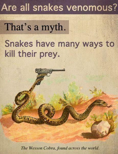 snake memes